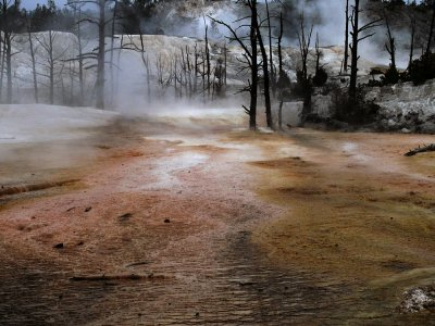 Thermal Forest, Mammoth Hot Springs, Yellowstone National Park, Wyoming, 2008