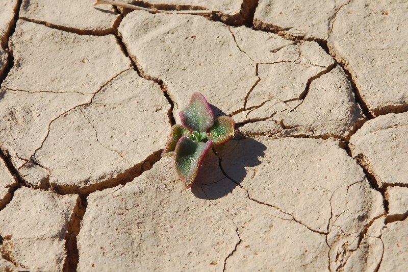 NamibianGarden.jpg