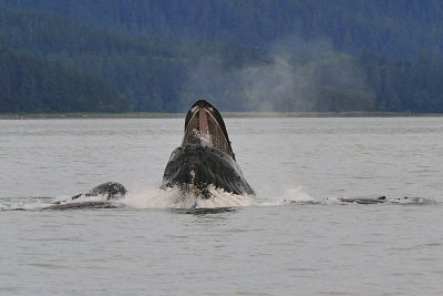 AlaskaWhales09g.jpg