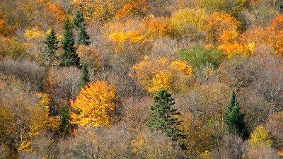 Forêt du parc de la Jacques Cartier