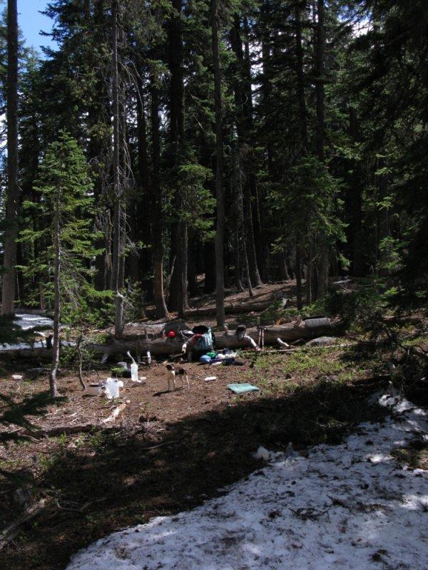 Kelly surveys our Mt McLoughlin base camp