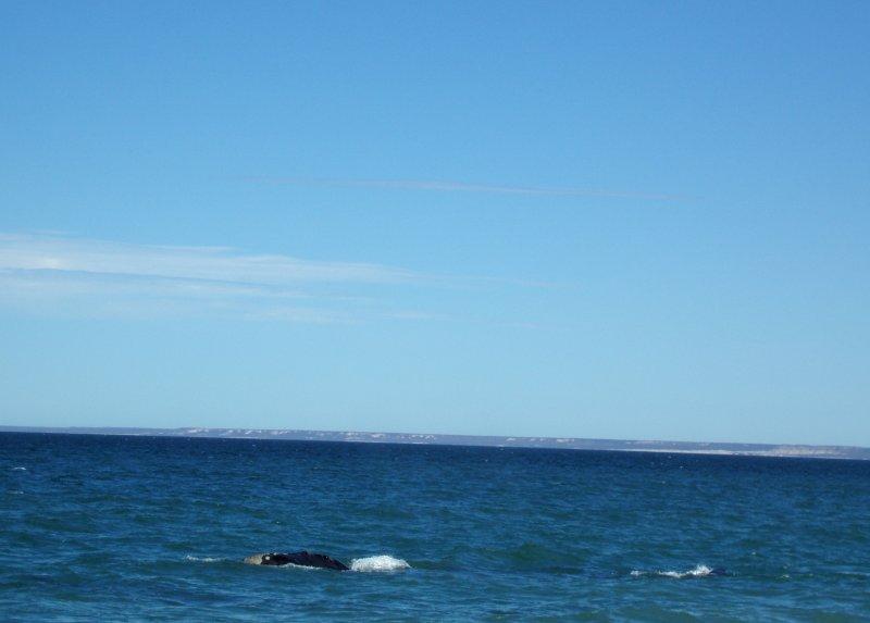 4  Puerto Madryn towards Peninsula Valdez 20101102.jpg