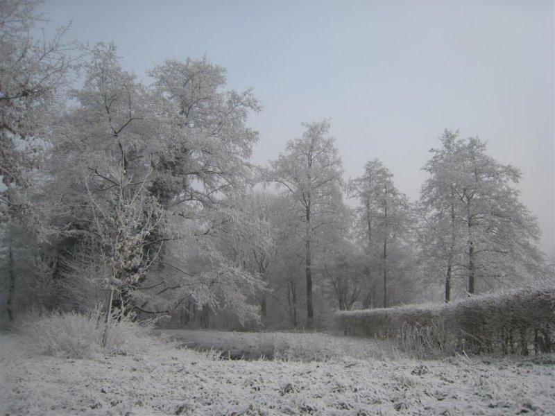 045 - De Bilt: zware uitsneeuwende mist bij de Biltse Rading