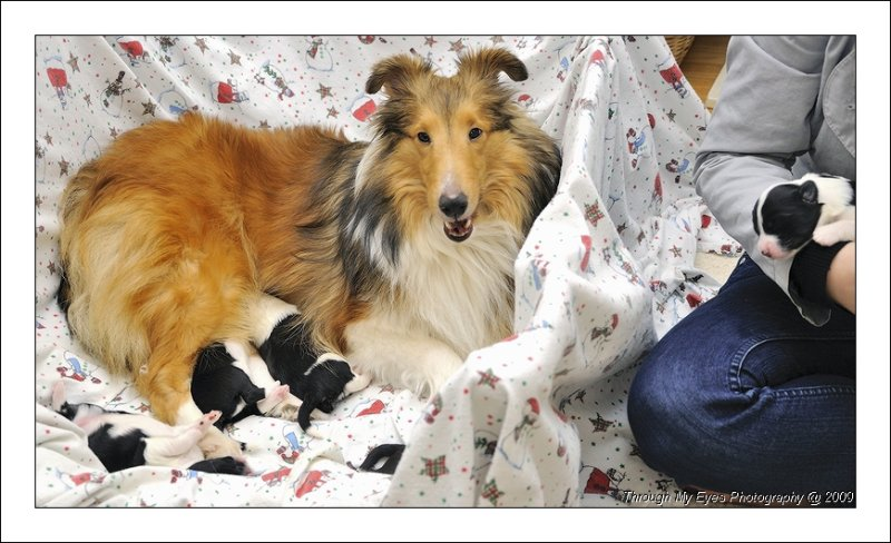 Bailey  and her Puppies