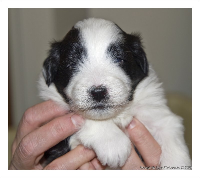 Baileys Puppy at 3 weeks