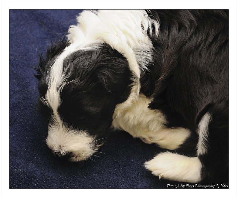 Baileys Puppy at 4 weeks