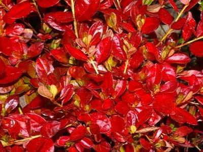 Jeremiah fall leaves
