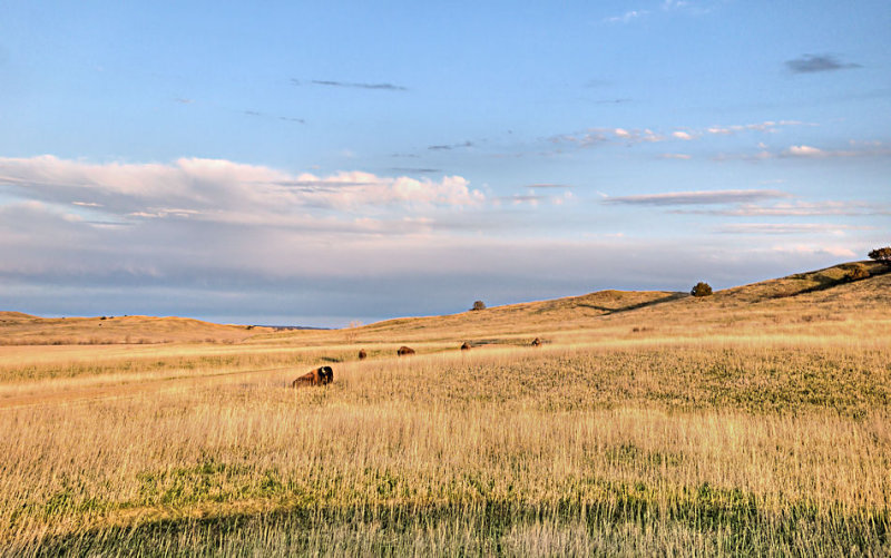 _APR3021_Buffalo Gap Grasslands