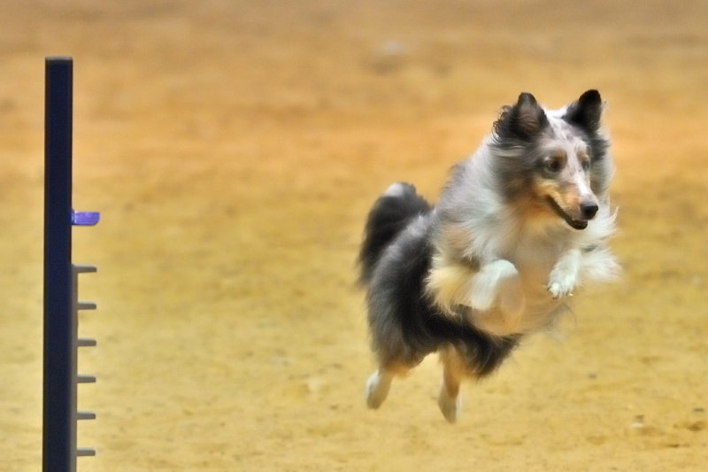 Rowdy dog - airborne