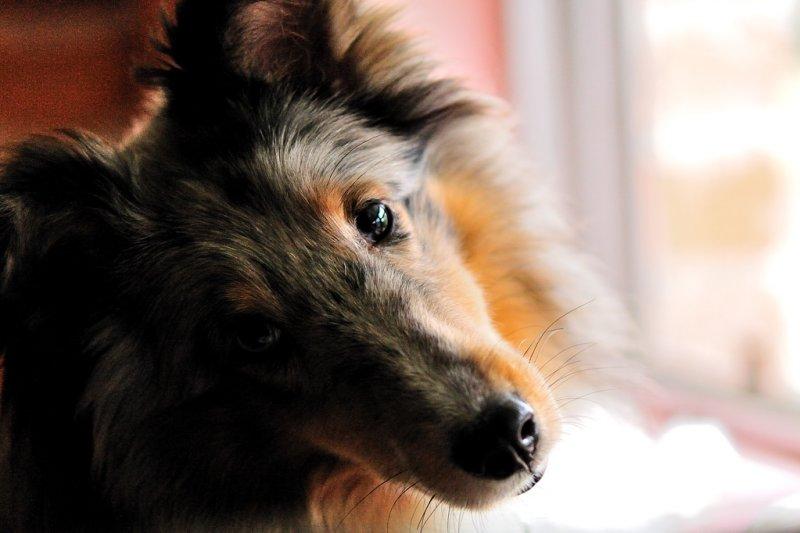 _Rowdy dog - February, 2010