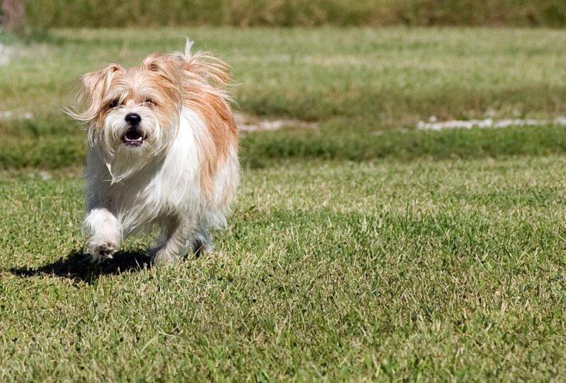 Beckys Dog