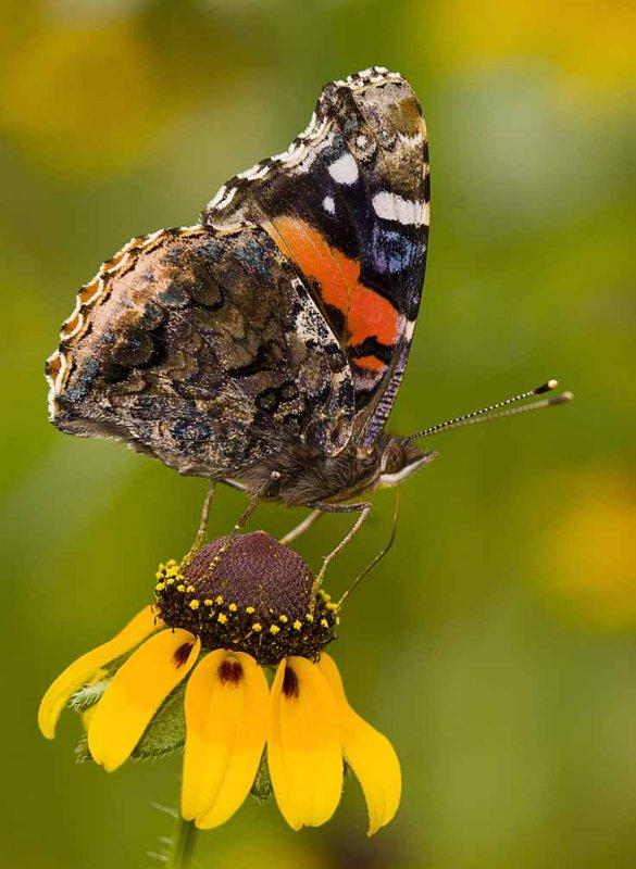 butterfly 2007.jpg