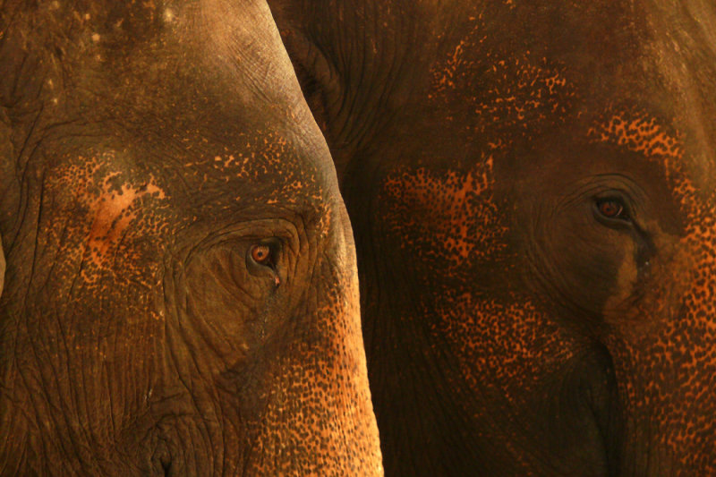 Two elephants.jpg
