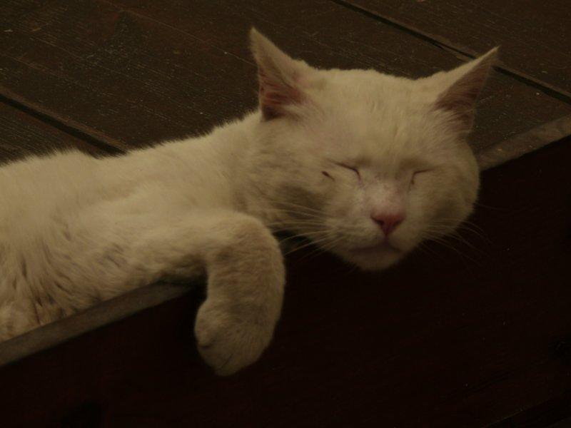White cat web.jpg
