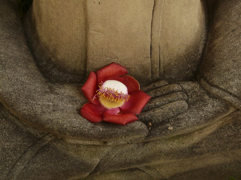 Buddha with flower.jpg