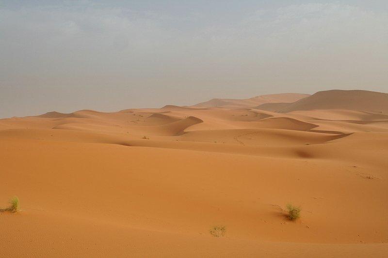 Sahara7.jpg
