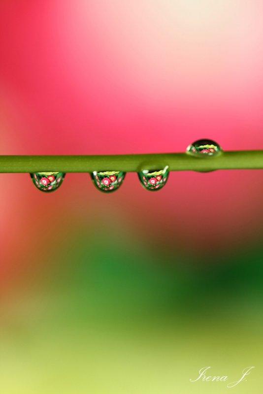 water drops (5 copy.jpg)