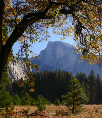Half Dome framed in Autumn