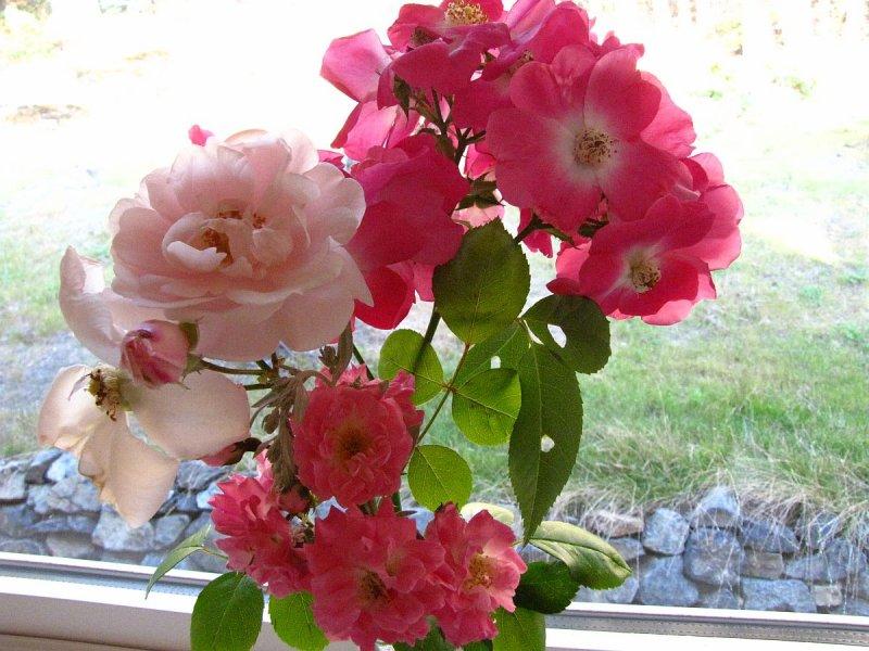 WINDOW SILL ROSES.
