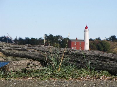 Leaves logs and lighthouse.