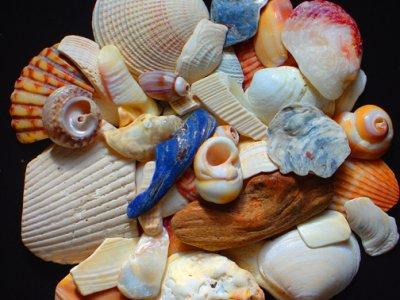 shells   014 b.jpg