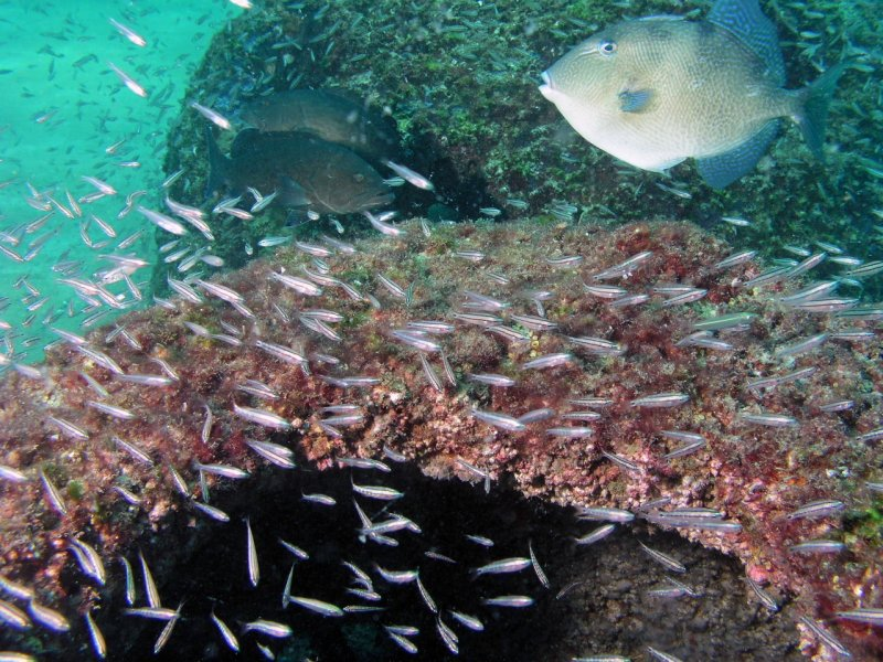 Trigger and groupers
