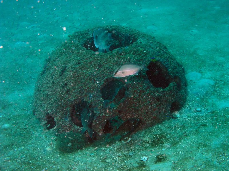 Reefball on Bainbridge Reef