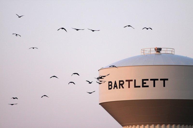 Bartlett Birds