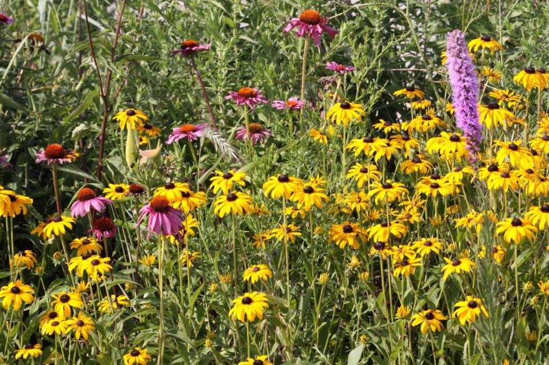 Summer Wildflower Garden