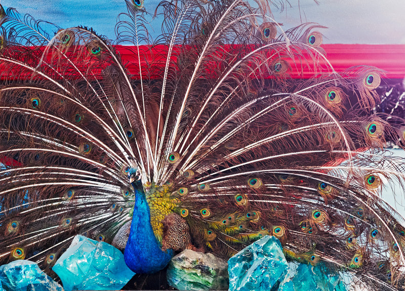 Peacock Rice Village Bead Shop 01