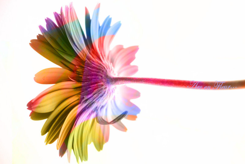 Arc-en-Fleur....My Rainbow