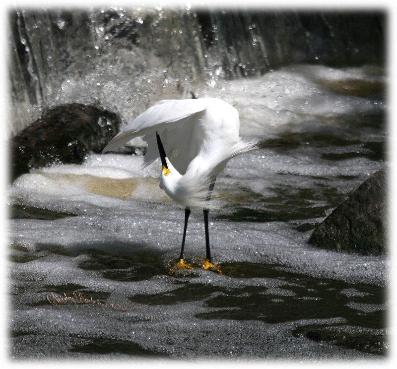 Do this egret-08.jpg