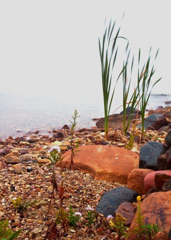 Grass & Rocks in Fog