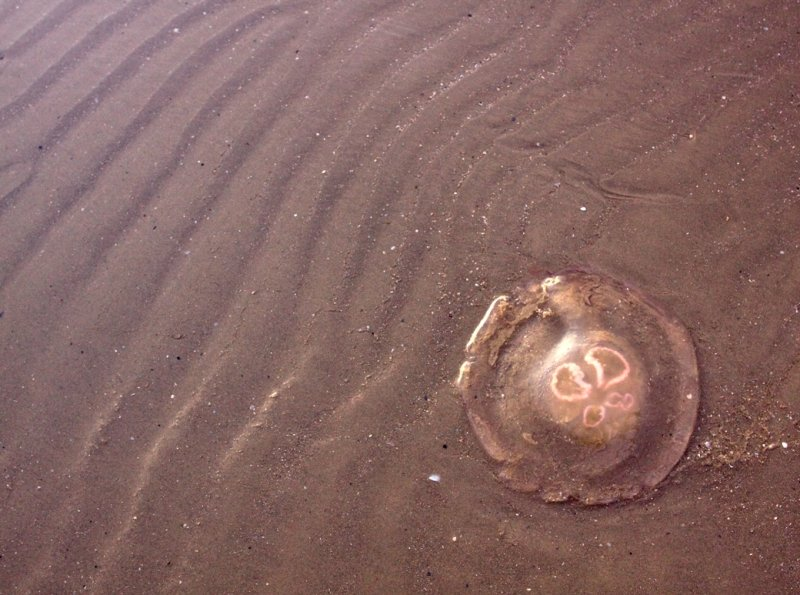 Sand Ripples & Jellyfish