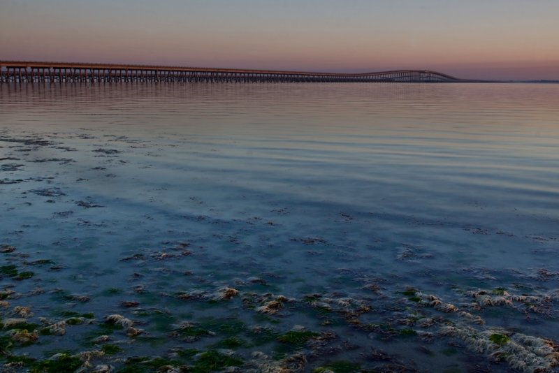 Compano Bridge & Seaweed