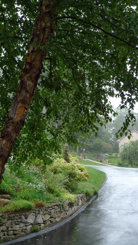 P1050824 Driveway in the Rain