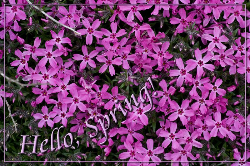 _MG_0283 Hello Spring