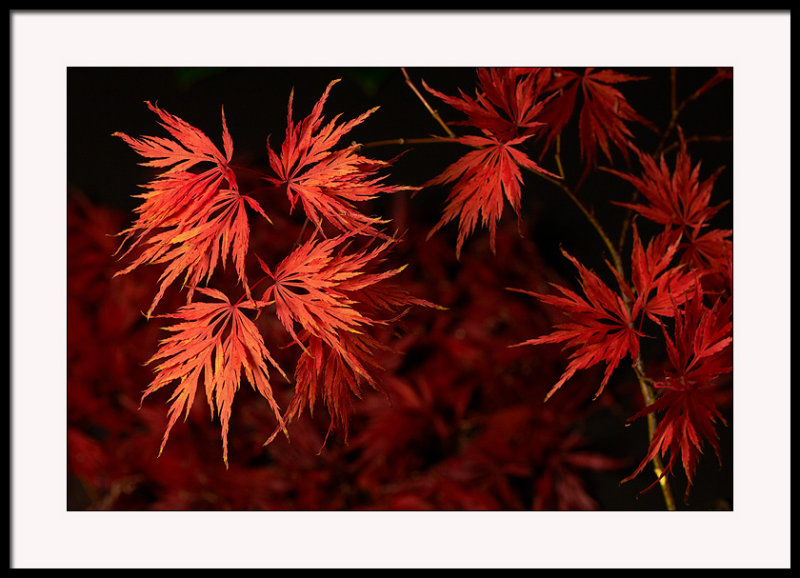My Acers on fire this year....