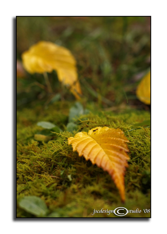 Gold on Moss<br>November 15