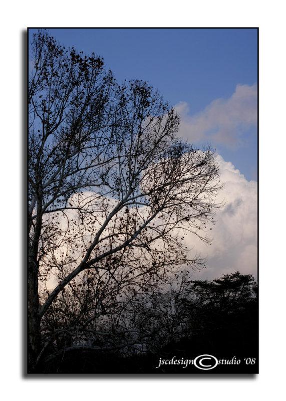 Winter Blue<br>November 24