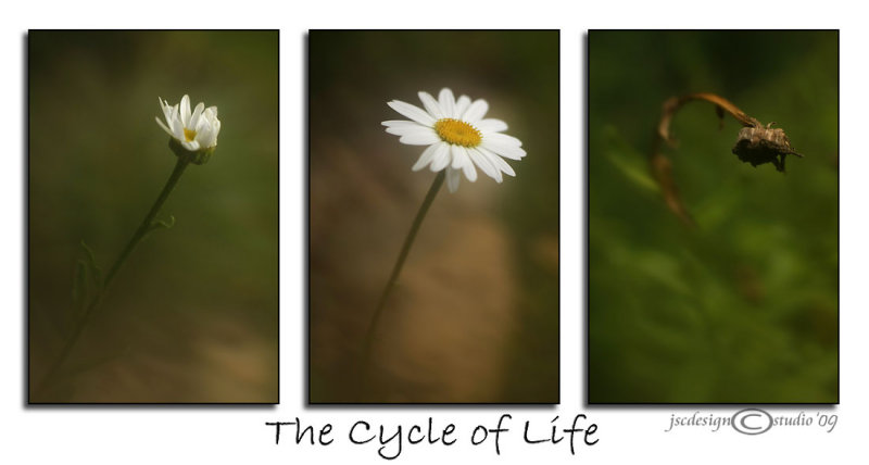 Cycle of Life<br>August 11