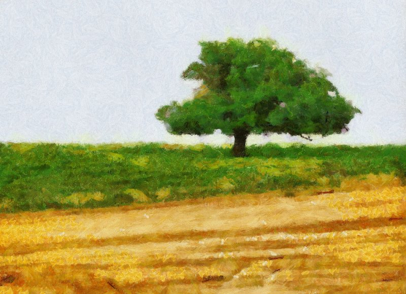 Tree with Wheat Field