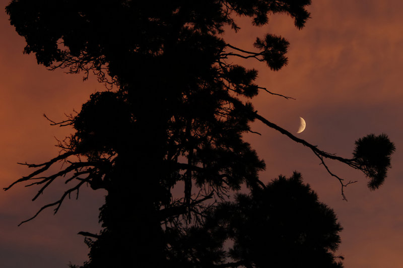 Crescent Moon with Tree