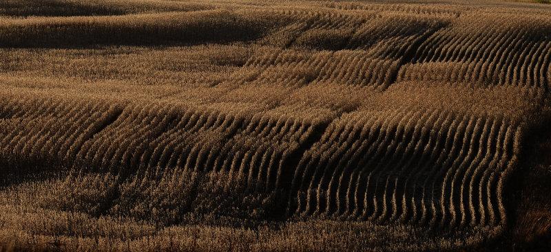 Fall Row Crops