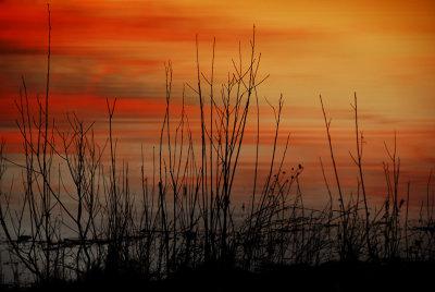 Shoreline Sunset Reflection