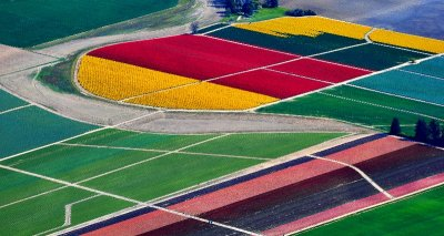 skagit valley tulip fields, Mt Vernon, Washington