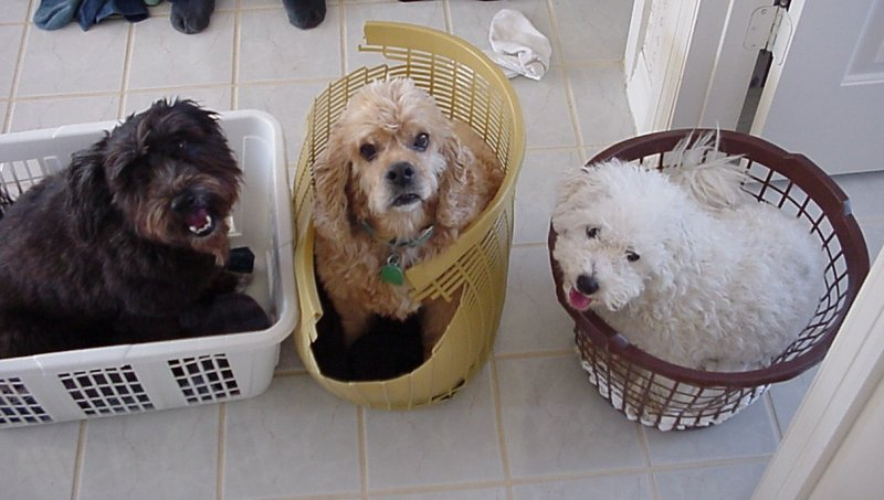 Dogs in Laundry Baskets