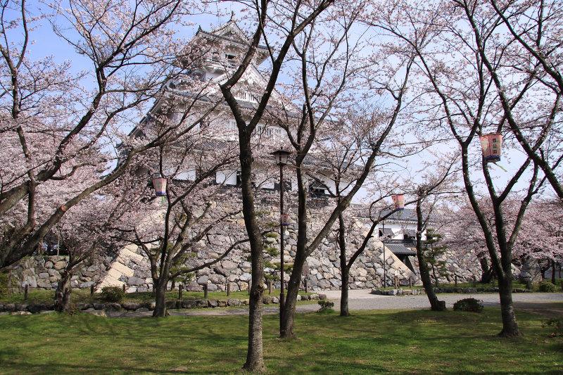 Partially obscured donjon beyond the sakura