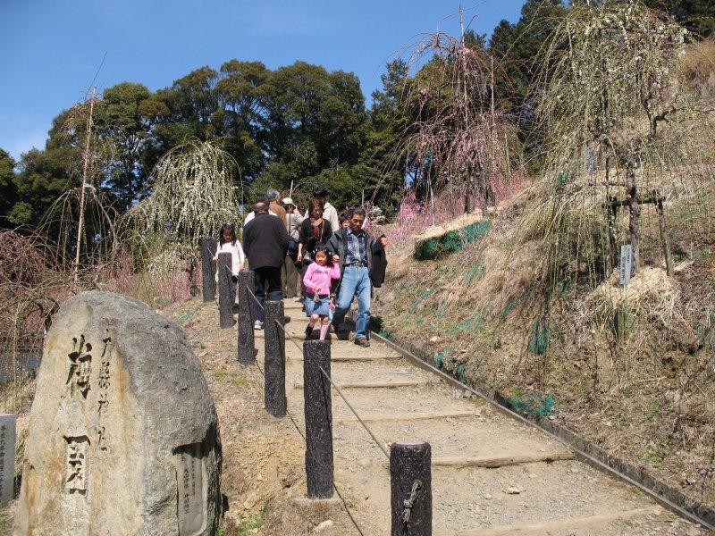 Slope leading to plum blossom garden