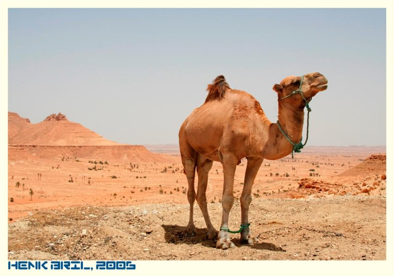Camel Mountain